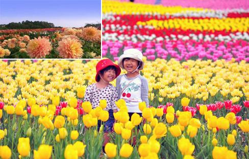 大規模な花観光農園